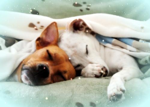 SleepyWinterPups