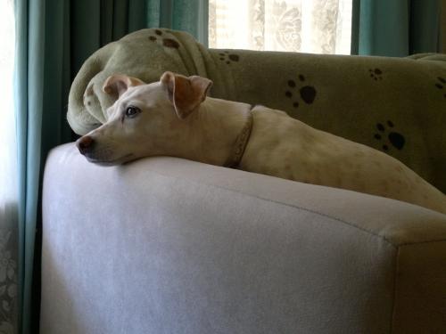 pets | YawningDogBlog
